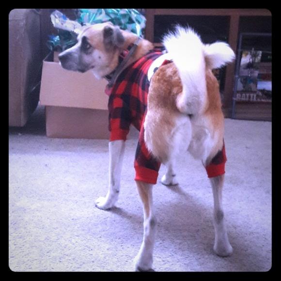 lazy one Other - Dog Pajamas!!!